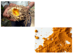 Turmeric Pain Relief