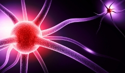 Neurons - Pain Relief